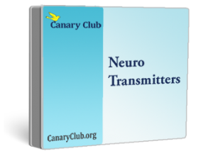 ZRT Neuro Advanced Neurotransmitters Profile